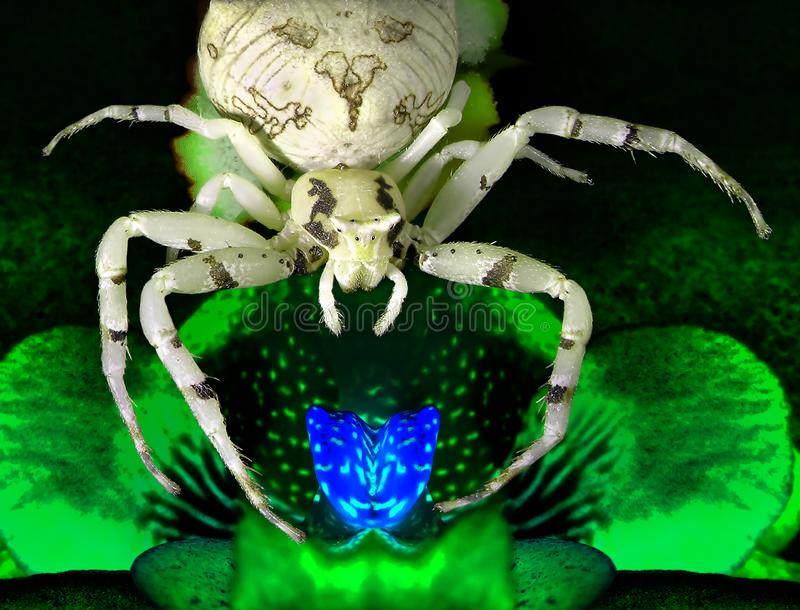 Magic luminous blooming orchid flower and the spider that guards him. Inspiration fantasy image on a black background royalty free stock photos