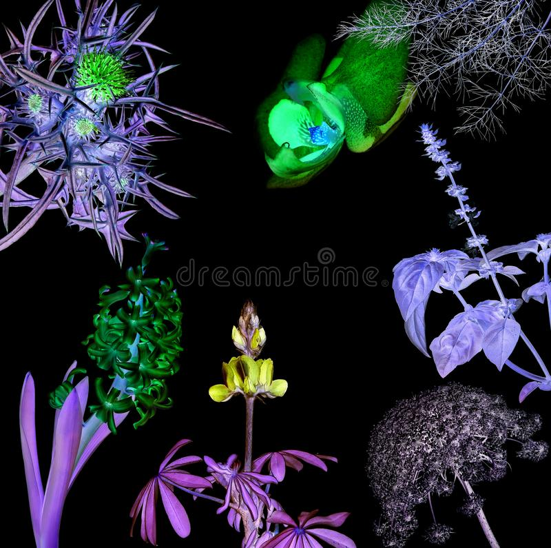 Magic luminous flowers stock image