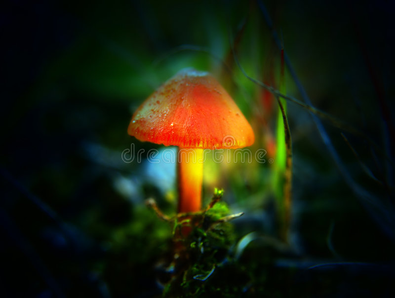Download Magic mushroom stock photo. Image of fresh, bright, creation - 5023934