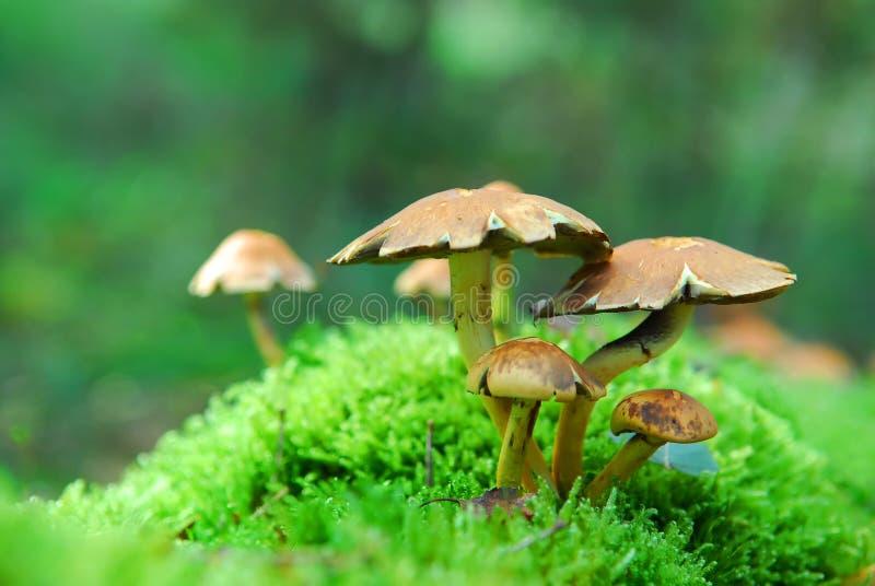 Magic mushrooms stock photo