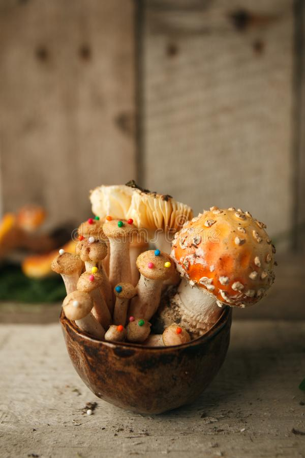 Magic Mushrooms and amanita Fly agaric on Wood, Shot on rustic wood in natural light. stock photography