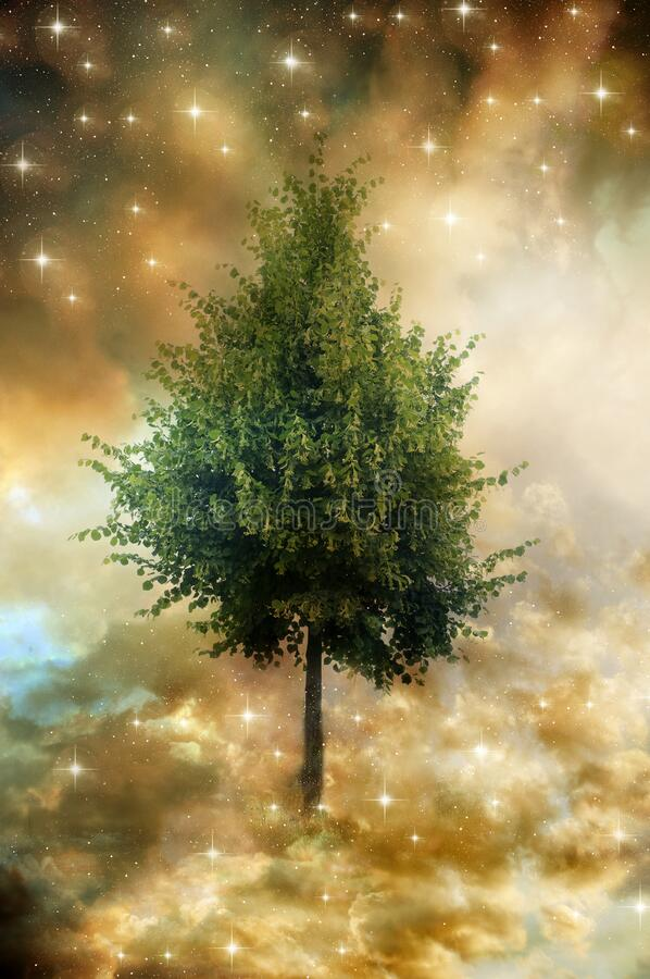 Magic mystic tree of life in divine sky and stars stock photo