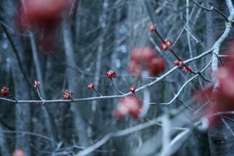 Magic Nature Spring Bing Buds Flora Flowers Tree Branch Renhet royaltyfria bilder