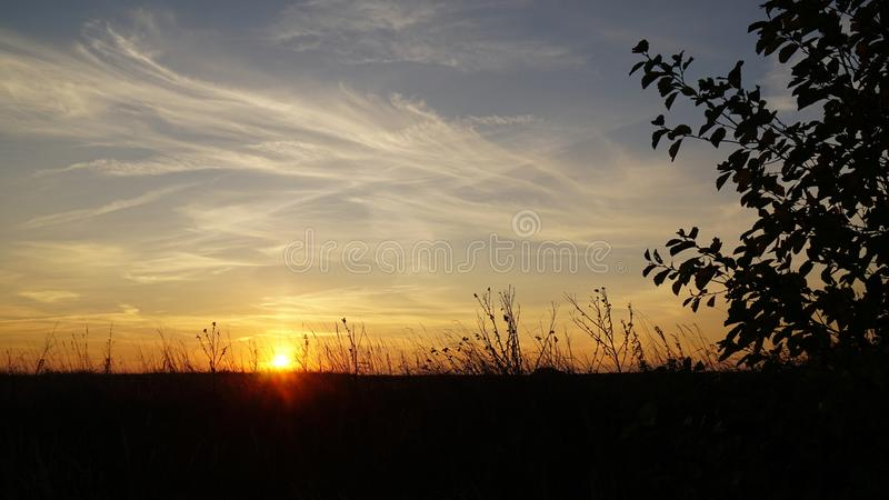 The magic nature - sunrise. Sunrise and magical moment. Color variation. Magic Heaven. Silhouettes of plants stock photo