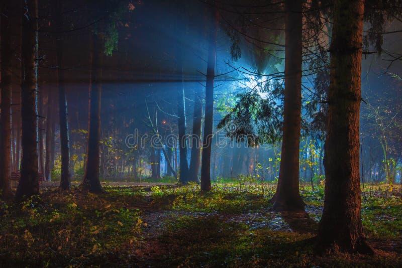 Magic night park stock photo