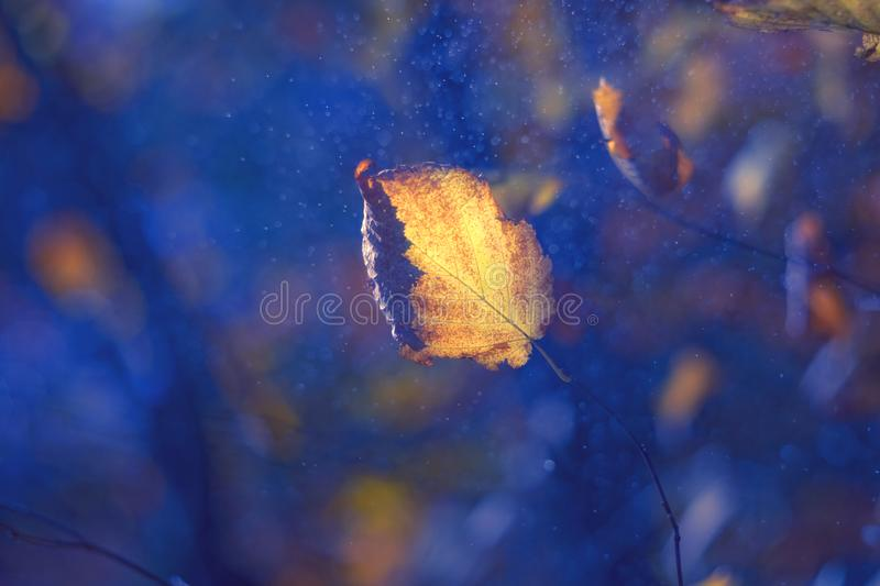 Autumn orange leaf in fantastic bubbles on blue background royalty free stock photography