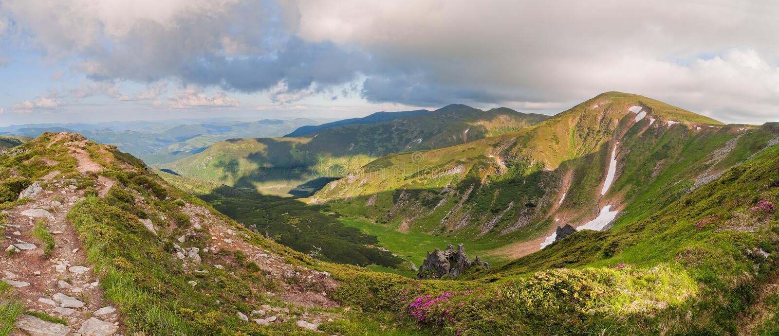 Magic pink rhododendron flowers on summer mountain. Dramatic scenery. Carpathian, Ukraine, Europe. royalty free stock images