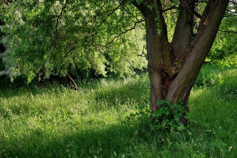 Summer landscape. Magic place. Green nature. Relaxation and tranquility in the park stock photos