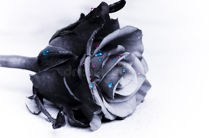 Download Magic rose stock photo. Image of pink, magical, gothic - 26828462