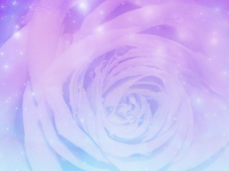 Download Magic rose background stock illustration. Image of romantic - 94174523