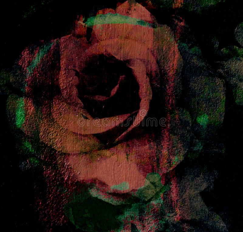 Magic rose, flower dark rose painted Alice rose stock photo