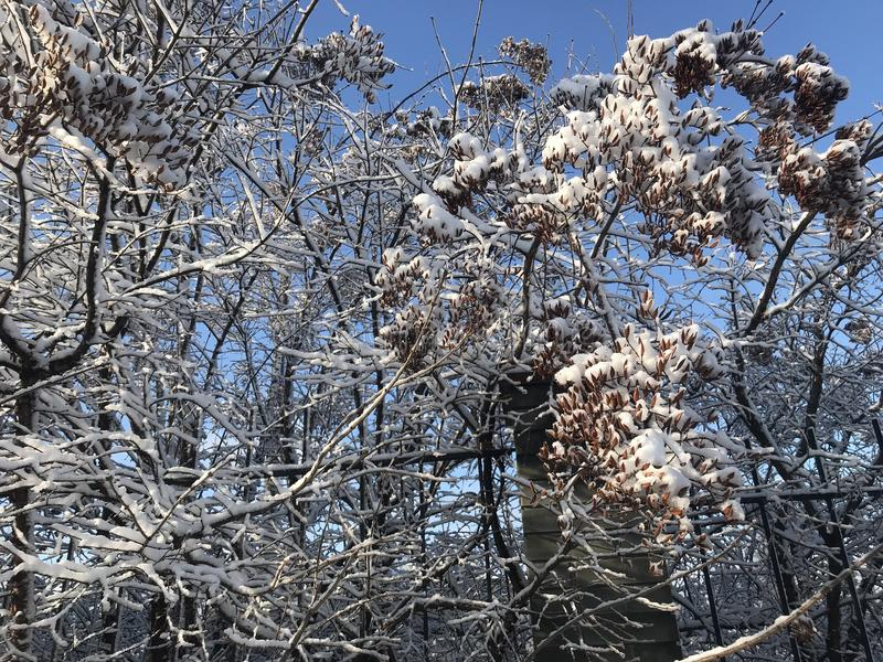 Magic winter in ZP. Magic Snow in February, winter morning, Botanical Garden, ZP stock photography