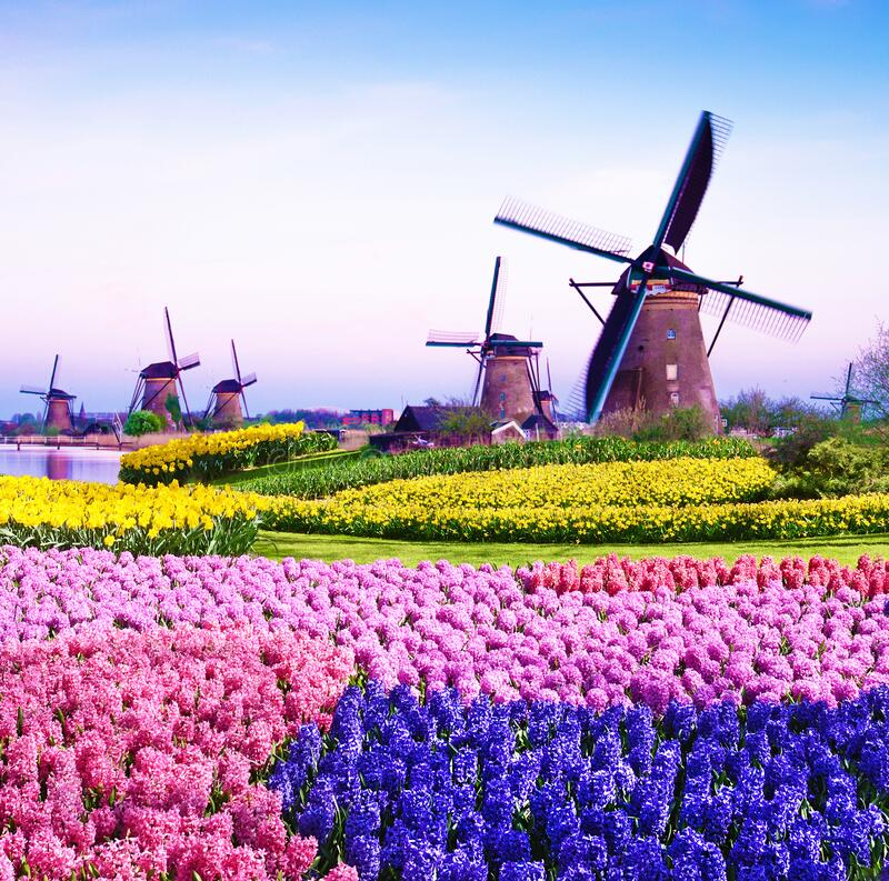 Magic spring landscape with flowers and patterns in aerial Mill Kinderdijk, Netherlands, Europe at sunset harmony, relaxation,. Anti-stress, meditation stock image