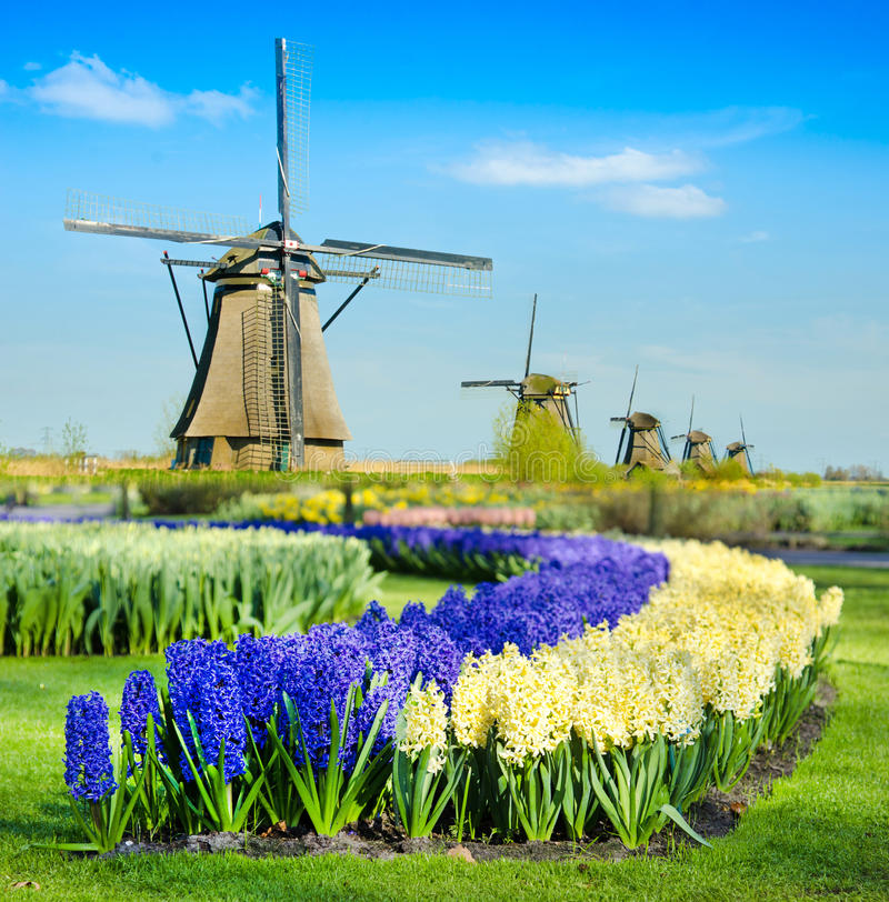 Magic spring landscape with tulips and aircraft Mill in Kinderdijk, Netherlands, Europe. Harmony, relaxation, anti-stress, meditation - concept stock photo