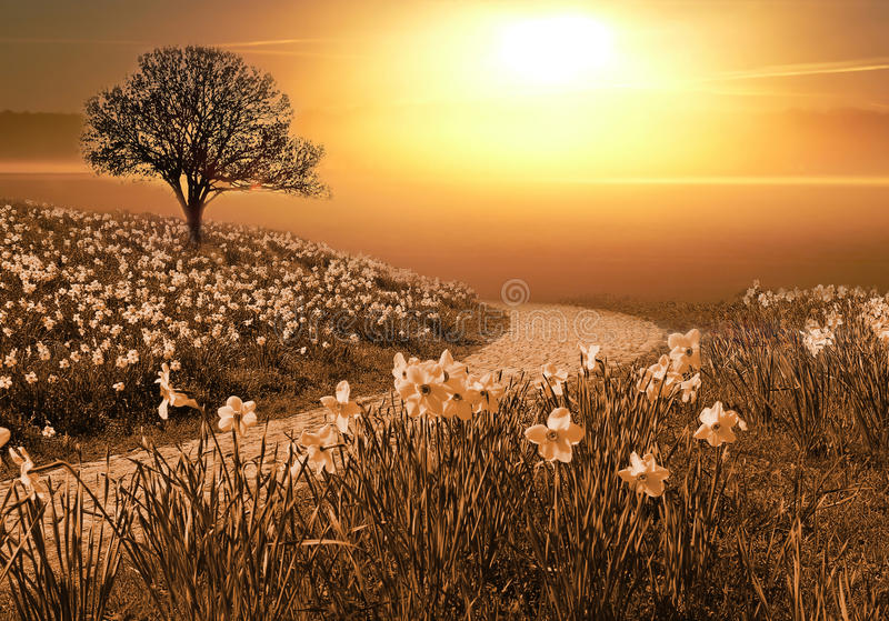Magic springlike landscape. Beautiful narcissus wildflowers and walkway at sunset royalty free stock photo