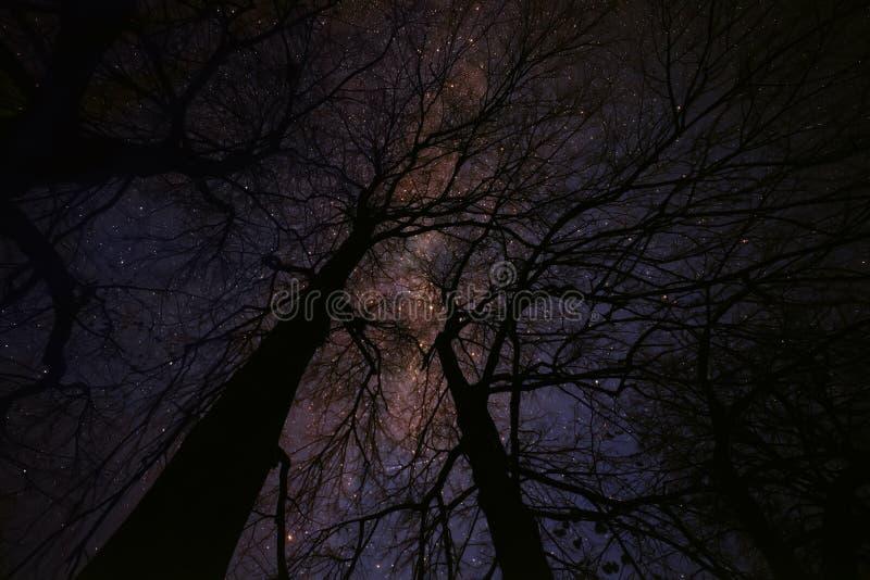 Magic starry fairy night. stock photos