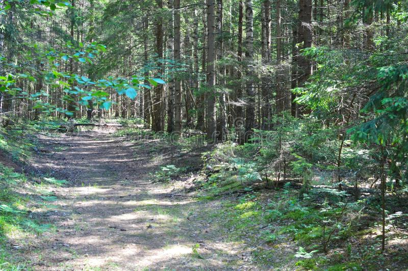 Picturesque footpath in the mysterious forest stock photography