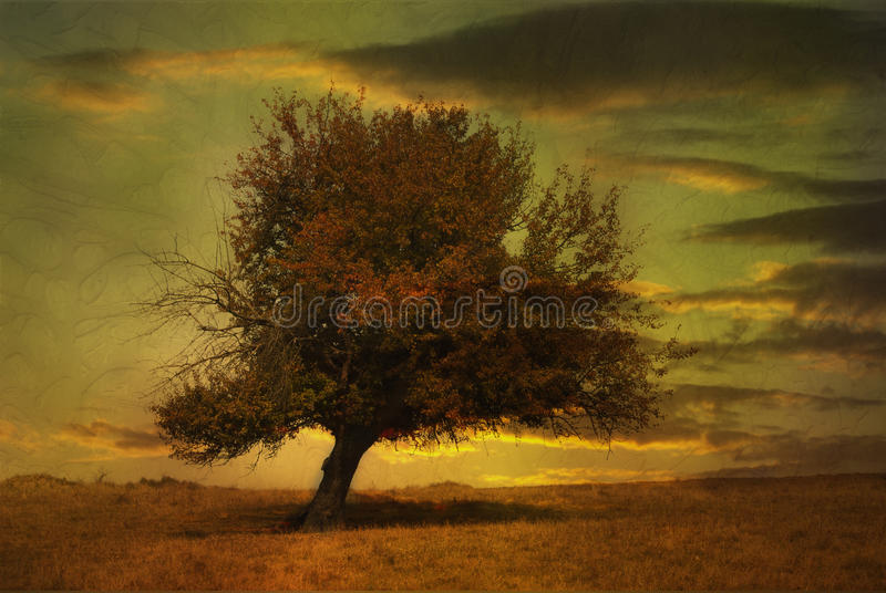 Magic sunset. Grunge fantasy sunset with a lone tree against beautiful cloudscape stock illustration