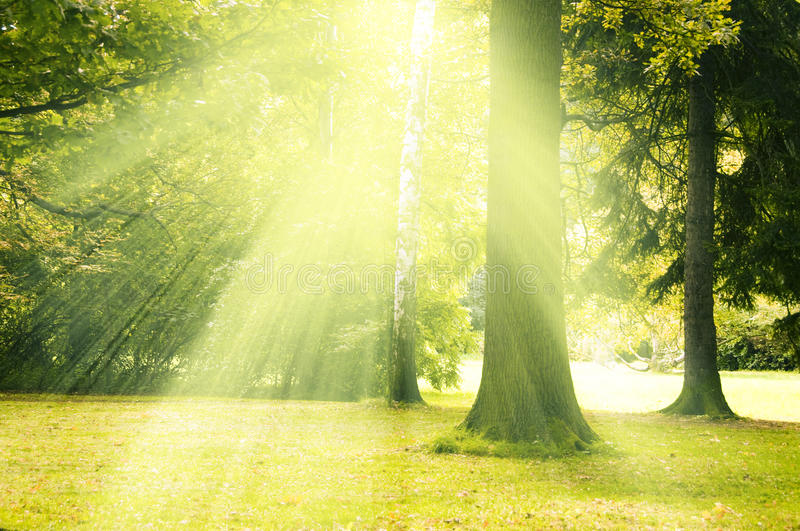 Download Magic tree stock photo. Image of sunny, mystical, outdoor - 24227598