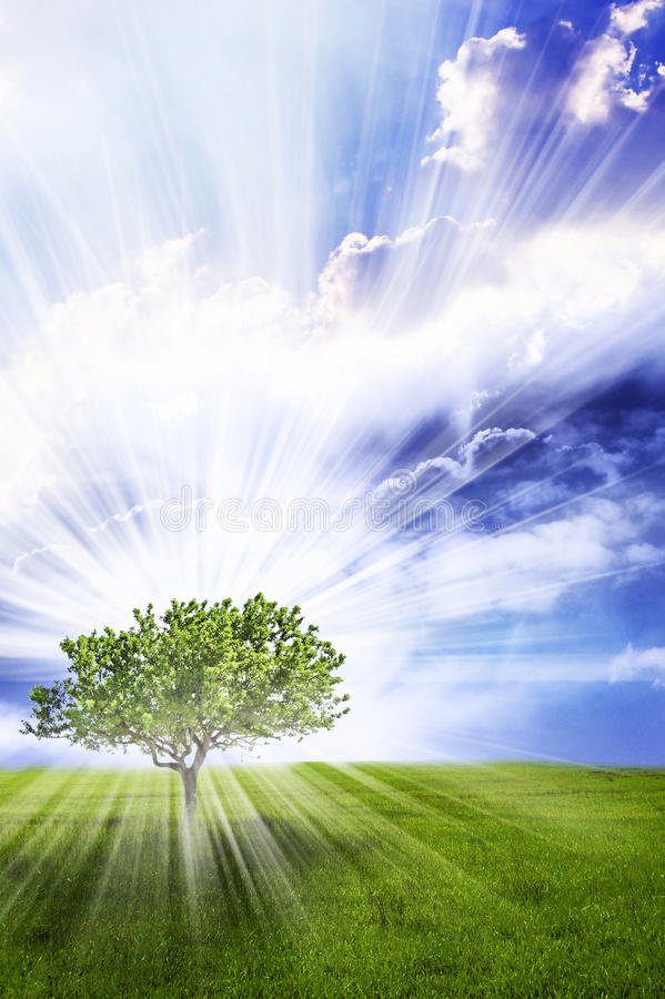 Download Magic tree stock image. Image of rays, landscape, light - 26385647