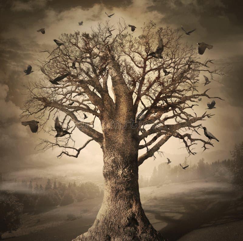Magic Tree with Crows stock photos