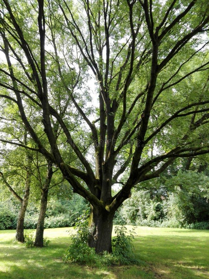 Magic Tree in park royalty free stock photos