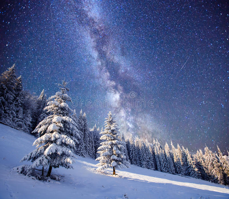 Magic tree in starry winter night stock photography