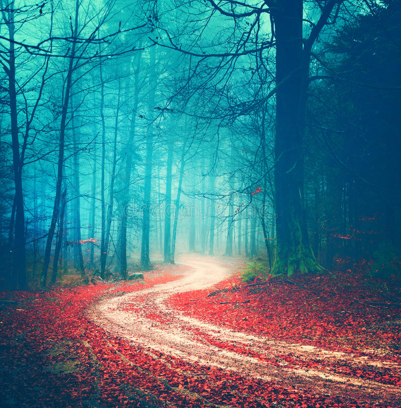 Free Magic Vintage Forest Road Royalty Free Stock Photography - 50070617
