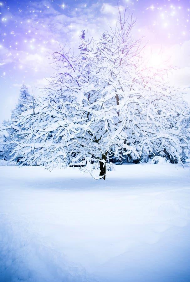 Magic winter royalty free stock photography
