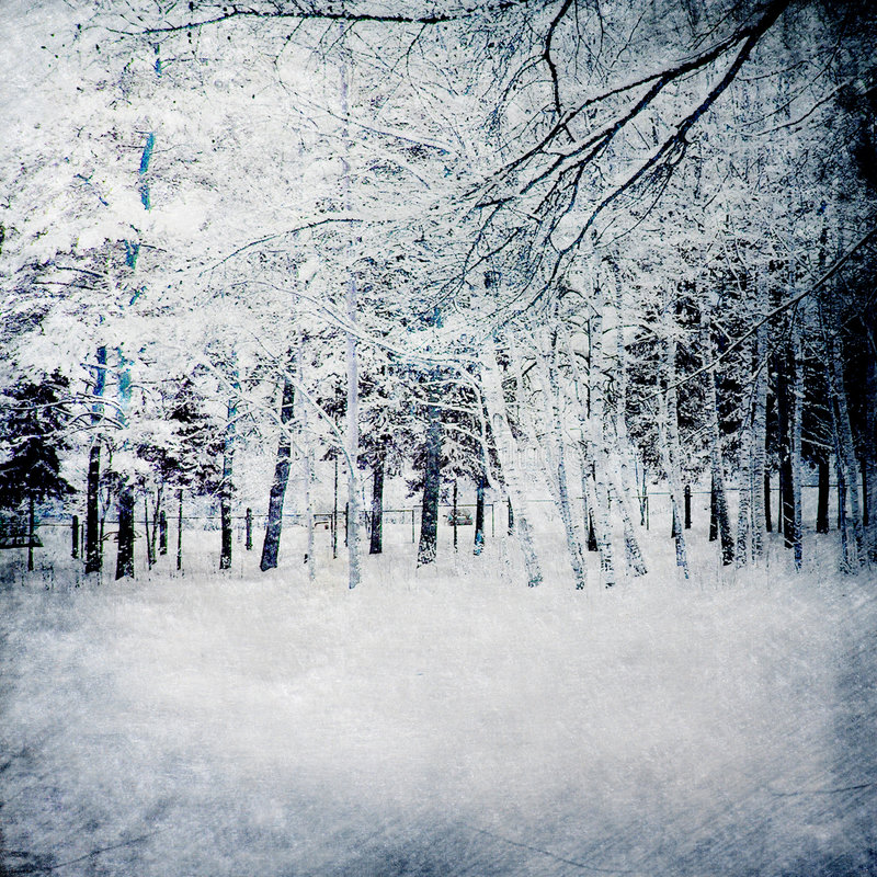 Magic winter background with forest royalty free illustration