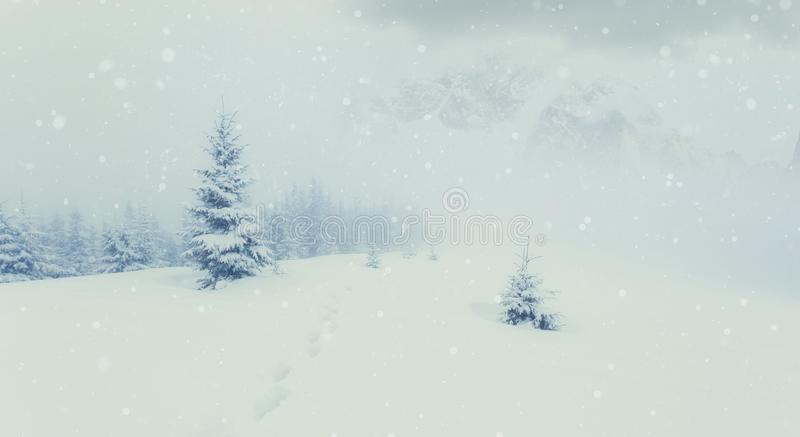 Magic Winter Landscape. Awesome alpine highlands in fog. Panoramic view of winter fairy-tale frosen trees and Majestic mountain. Magic Winter Landscape. Awesome stock photo