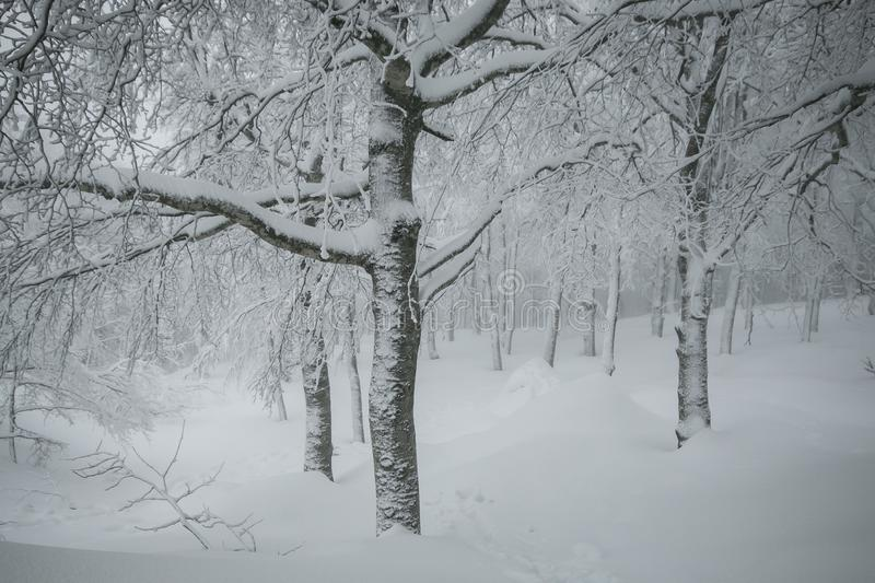 Magic winter wonderland forest with many snow in Tuscany. Italy, Europe royalty free stock image