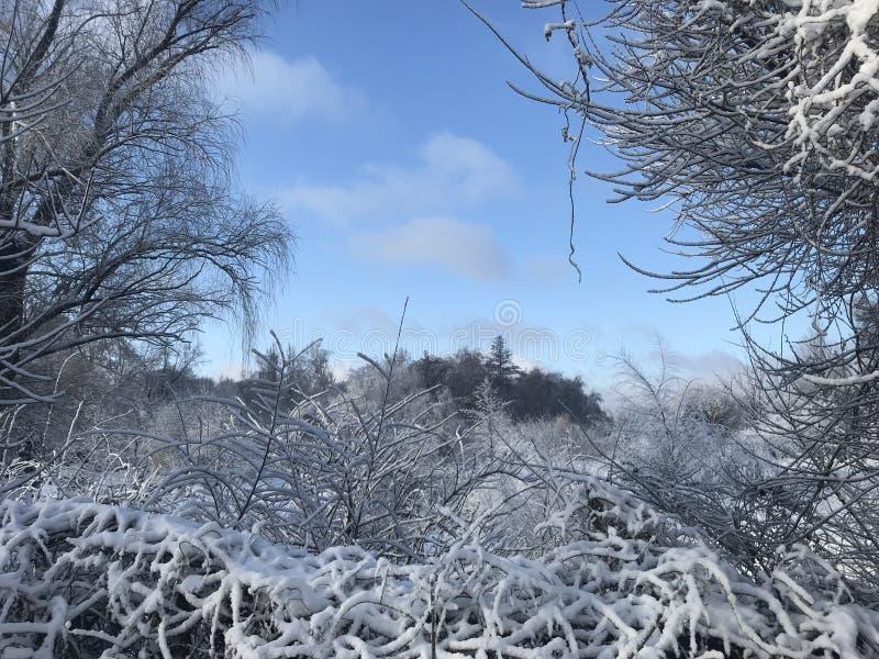 Magic winter in ZP. Magic Snow in February, winter morning, Botanical Garden, ZP royalty free stock photography