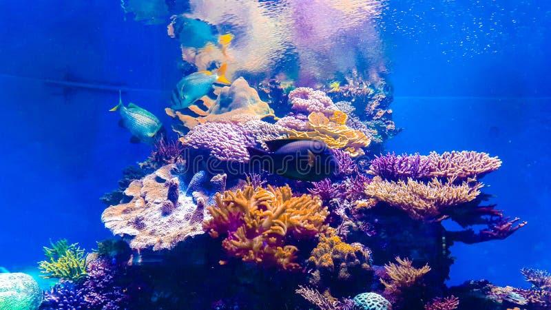 Magical aquarium stock photos