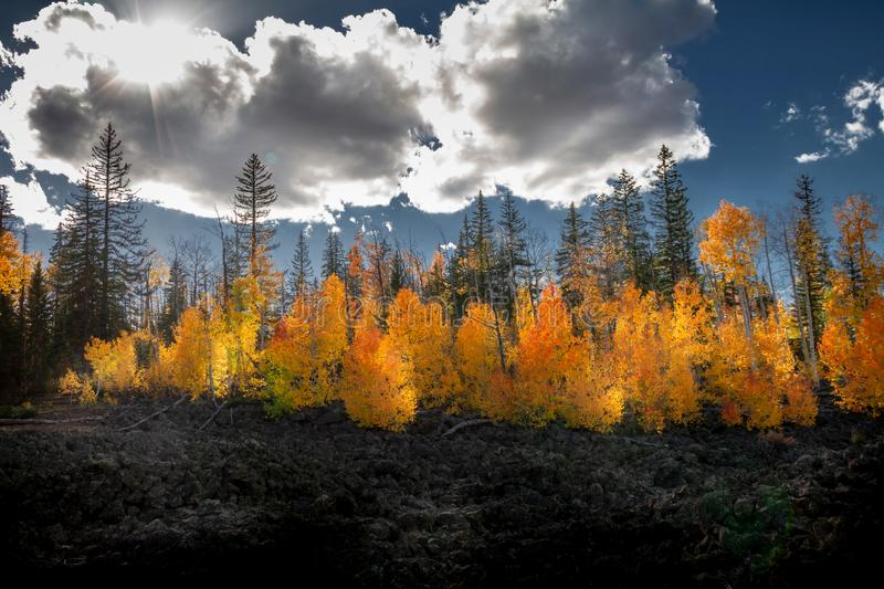 Magical Autumnal view of Dixie Forest with lava rocks, clouds, sun flare, and a wide variety of colored leaves near Cedar Breaks N stock photography