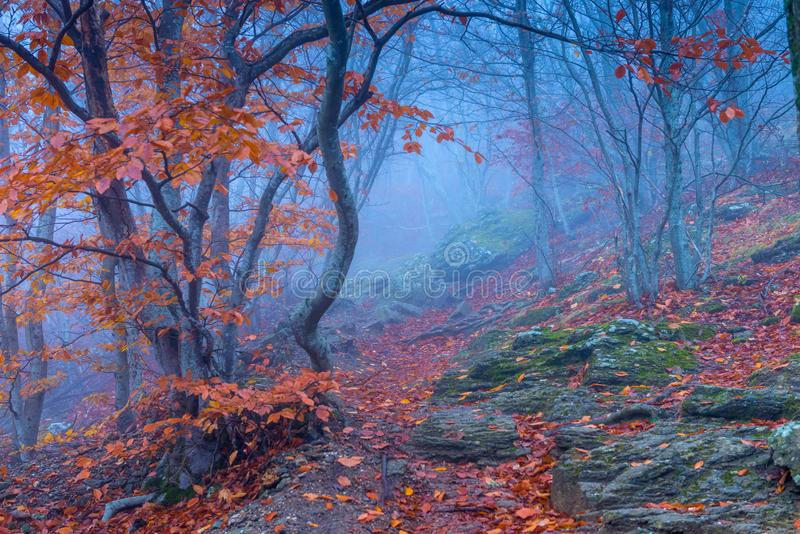 Magical beautiful and gloomy forest in the mountains. On an autumn day during thick fog stock photography