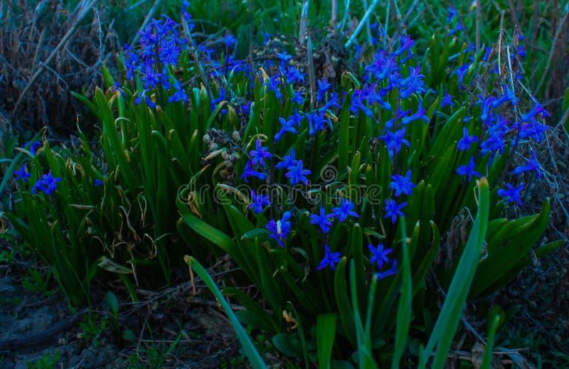 magical blomma fotografering för bildbyråer