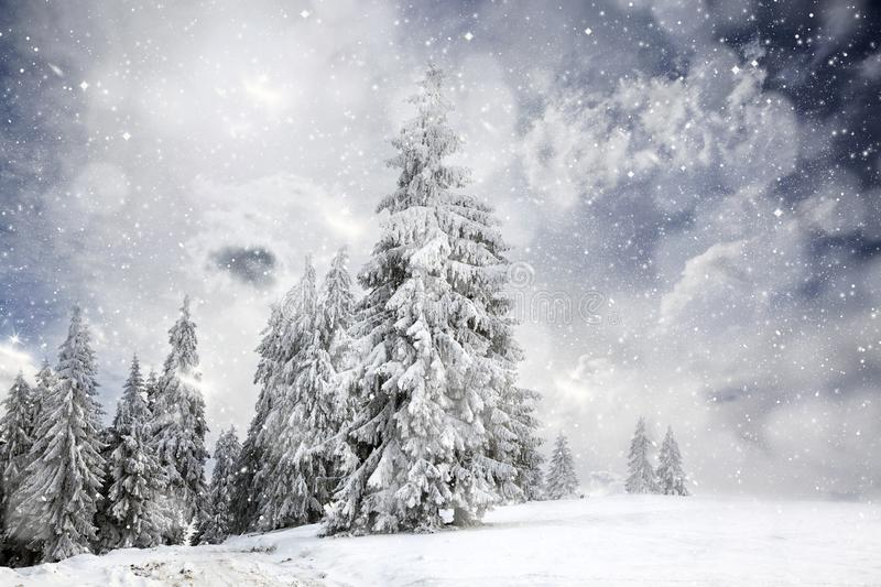 Magical Christmas card with fairy tale winter landscape with snow covered firs. Holiday, background, nature, sky, forest, snowy, travel, sunset, vacation stock photo