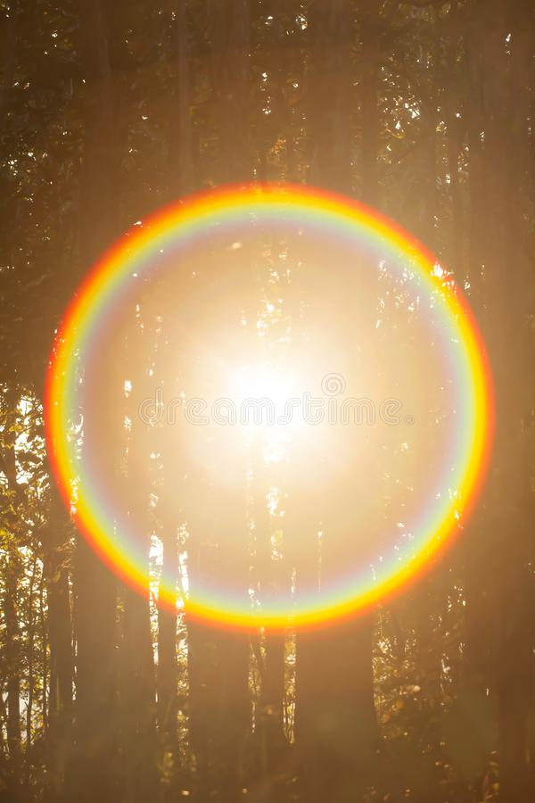 Magical circle rainbow ray from the sun. Shines through a forest royalty free stock photos