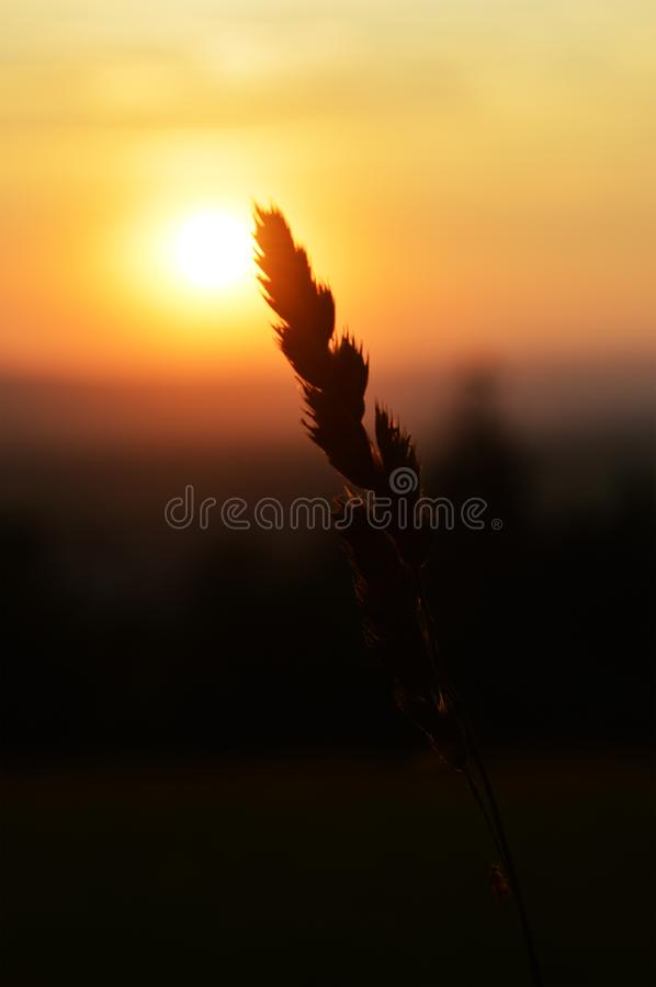 Magical end of the sunny day in beautiful nature royalty free stock photography