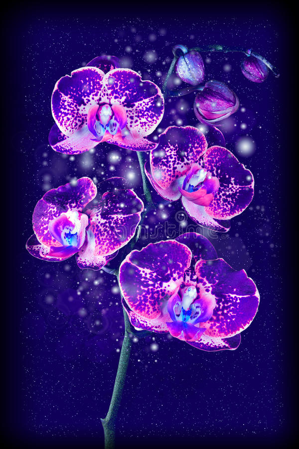 Magical flower orchid royalty free stock photography