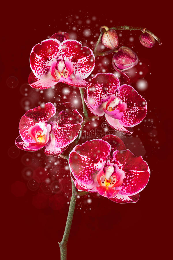 Magical flower orhid royalty free stock photo