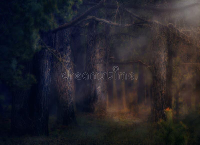dark deep magical forest with fog halloween background