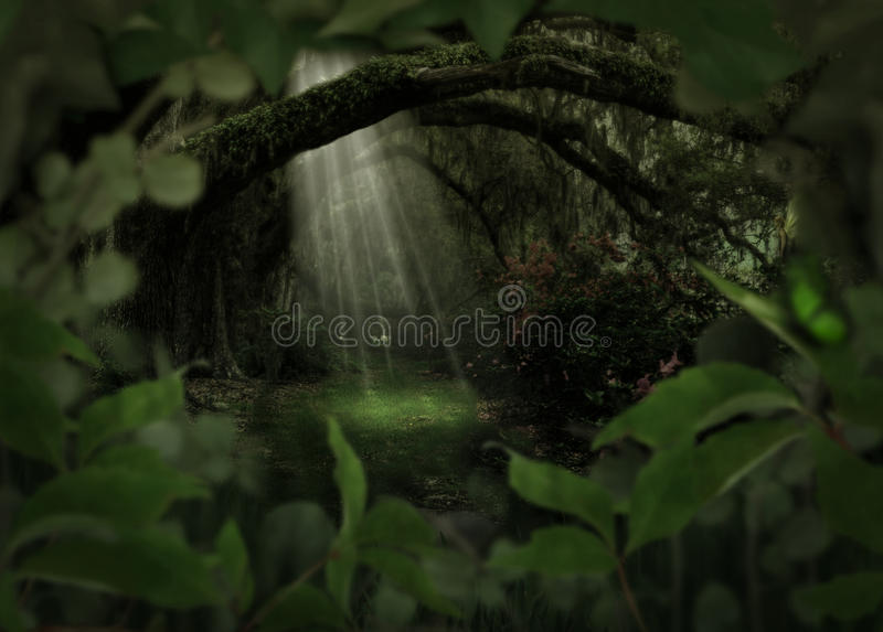 Magical forest stock image