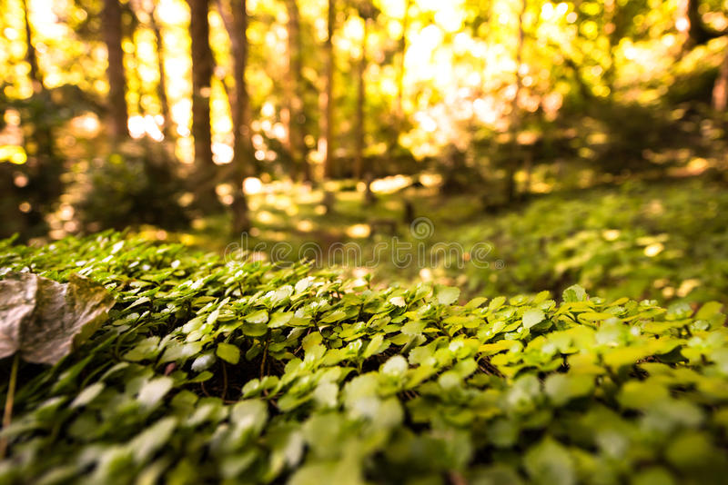 Magical forest view stock images
