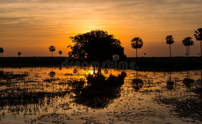 Magical Golden Sunset in the Pantanal Wetlands in Paraguay. The Pantanal is the world`s largest tropical wetlands area located on the border of Paraguay stock photography