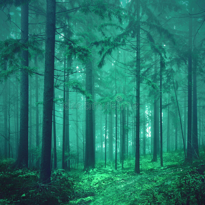 Free Magical Green Colored Foggy Fairytale Forest Stock Photo - 55004470