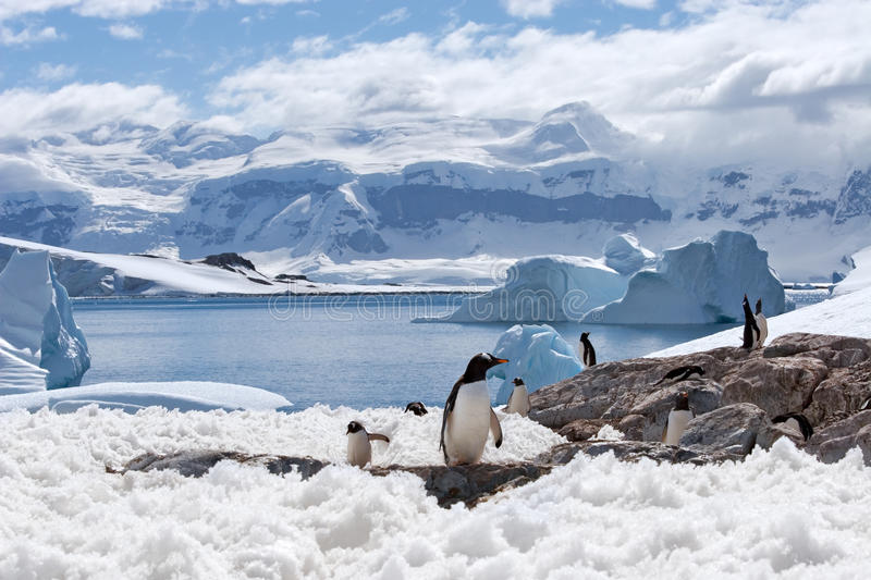 Magical home of penguins royalty free stock photography