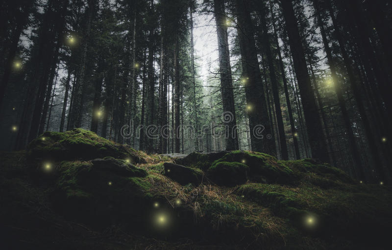 Magical lights in pine tree forest. Magical lights in dark pine tree forest royalty free stock photos