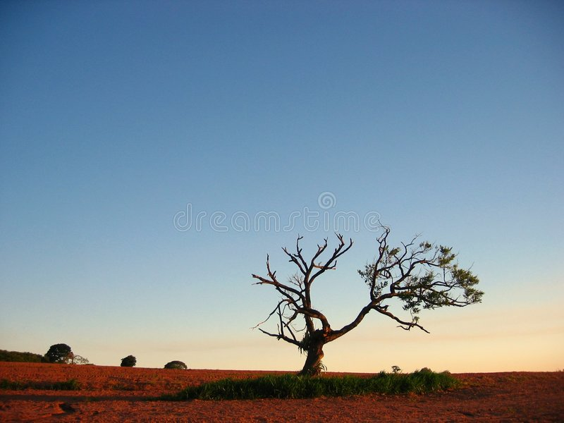 The Magical Mango Tree stock images